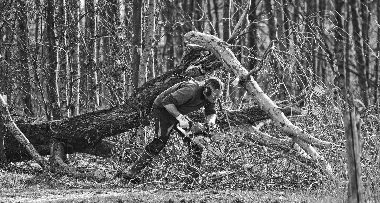 Métiers gestion durable forêt Bercé
