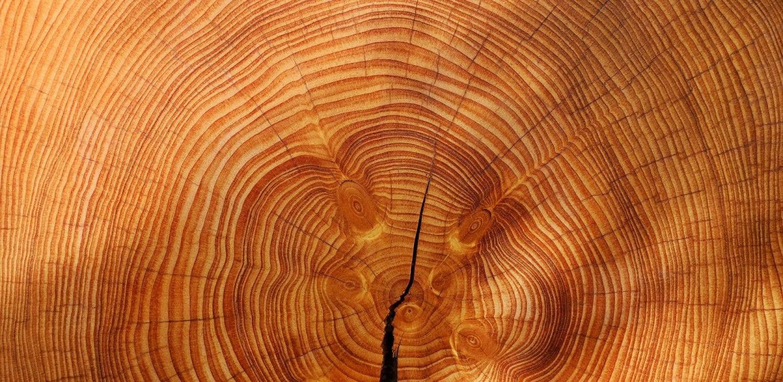 Musee carnuta tronc d'arbre