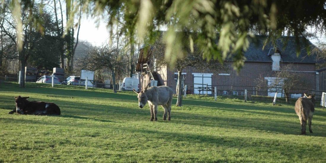 Les ânes de la ferme du Lieu Roussel