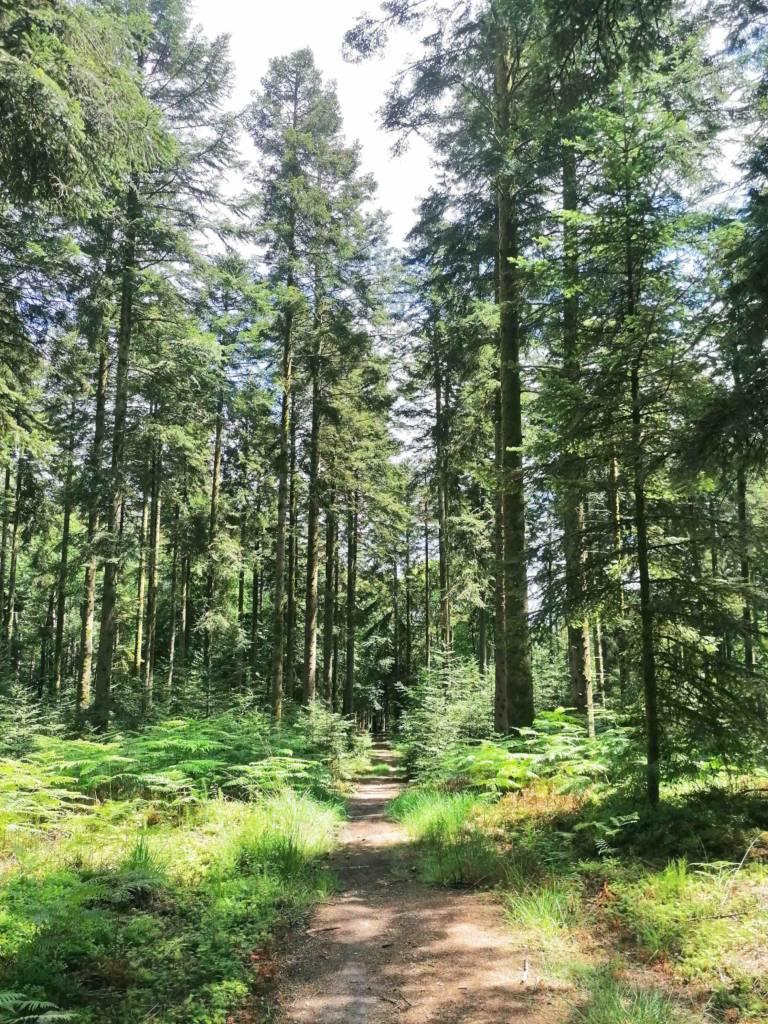 Où randonner dans la Forêt d'écouves